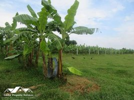 N/A Property for sale in Chheu Teal, Battambang Land For Sale in Kandal