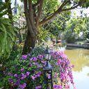 Maneerin Lake & Park Ratchaphruek-Tiwanon