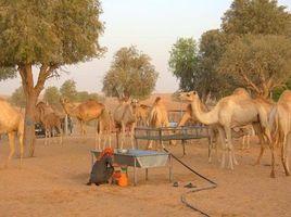 N/A Land for sale in Hoshi, Sharjah Al Khawaneej