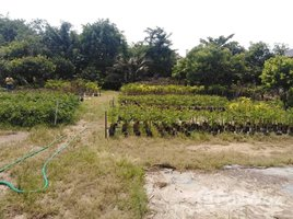 N/A Property for sale in Nong Yaeng, Chiang Mai 1 Rai Land Plot For Sale in San Sai