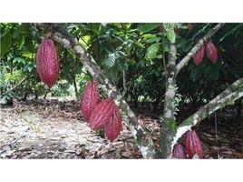 N/A Terreno (Parcela) en venta en , Alajuela COCOA FARM IN PRODUCTION AND GROWING: 900701029-96, San Carlos, Alajuela