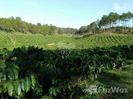 林同省 Phi Lieng Chính chủ cần bán đất cà phê tại Thôn Đồng Tâm, Xã Phi Liêng, H. Đam Rông. Đất vườn rộng có nhà ở N/A 土地 售
