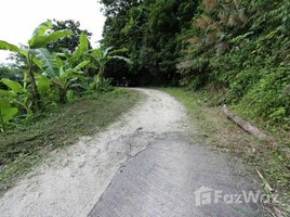 N/A Land for sale in Patong, Phuket Sea View Land 4 Rai in Patong, Phuket