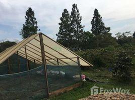 ທີ່ດິນ N/A ຂາຍ ໃນ , ຈຳປາສັກ 1 Bedroom Land for sale in Champasak