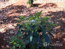 N/A Land for sale in Ia Pia, Gia Lai Bán gấp 5 mẫu đất vườn (tiêu, điều, cafe, bơ), đang thu hoạch-LH +66 (0) 2 508 8780 Vân chính chủ