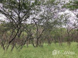 N/A Terreno (Parcela) en venta en Vilcabamba (Victoria), Loja 6.2 hectares of beautiful land, Vilcabamba, Loja