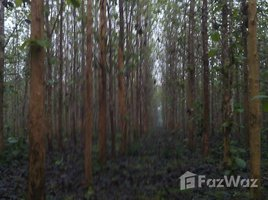 N/A Property for sale in Nong Phue, Loei 75 Rai Land with Trees For Sale in Loei