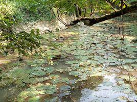 N/A Land for sale in Cu Yen, Hoa Binh Bán đất TC Lương Sơn Hòa Bình 1.1ha, 20m mặt đường xóm làm trang trại nghỉ dưỡng, giá rẻ +66 (0) 2 508 8780
