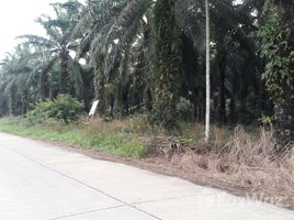 N/A Property for sale in Thung Luang, Chumphon 35 Rai Land For Sale in Chumphon