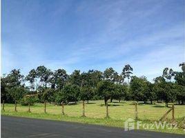 Limon Quinta multipropósito en ruta de gran afluencia: Mountain Home Construction Site For Sale in San Isi, San Isidro, Limón N/A 房产 售