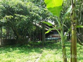 N/A Land for sale in Khi Lek, Chiang Mai Land In Mae Taeng