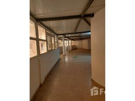 استديو شقة للإيجار في Smouha, ميناء الاسكندرية Green Towers