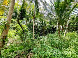 苏梅岛 Ban Tai Flat Coconut Plot in Ban Tai, Close to Main Road, Ko Phangan N/A 土地 售