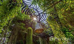 Photos 2 of the Communal Garden Area at The Riviera Jomtien