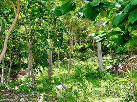 N/A Land for sale in Ko Pha-Ngan, Koh Samui Sea View Land for Sale in Koh Phangan