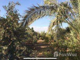 Al Jizah A farm for sale in a prime location at Wadi El Nakhil N/A 土地 售