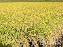 民马罗巴区 Naujan 3 Hectares of Agricultural Rice Farm for Sale in Naujan N/A 房产 售