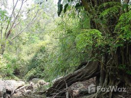 N/A Property for sale in Nong Bua, Loei 182 Rai Land for Sale at Phu Ruea, Loei