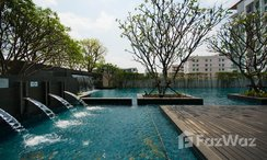 Photos 2 of the Communal Pool at The Room Sukhumvit 62