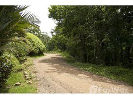 San Jose Mountain Agricultural Land For Sale in Barú, Barú, San José N/A 房产 售