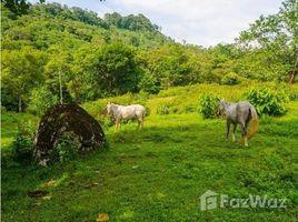 Cocle Toabre FARM IN CASCAJAL PANAMA, Penonomé, Coclé N/A 房产 售
