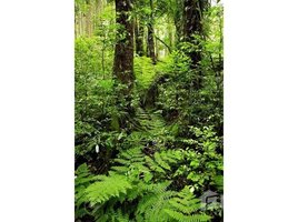 Alajuela JUNGLE PARADISE: Nature lovers paradise: 238 acres of forest, Cote, Alajuela N/A 土地 售