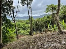 N/A Land for sale in Patong, Phuket 10 Rai Land in Patong on the Main Road