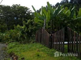 Limon Land for Sale in Siquirres with Approximately 7 Hectares N/A 房产 售