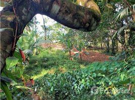 N/A Terreno (Parcela) en venta en Bastimentos, Bocas del Toro BOCAS DEL TORO, LOMA CHICA, ISLA BASTIMENTOS, Bocas del Toro, Bocas del Toro