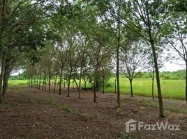 N/A Land for sale in Nam Chan, Bueng Kan 12 Rai Land For Sale In Bueng Kan