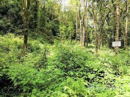 San Jose San Gerardo de Dota, 2 km sur de Savegre Lodge, Pérez Zeledón, San Jose N/A 土地 售