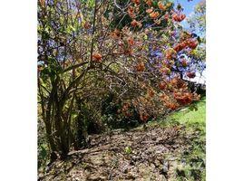 Cartago Los Ángeles, Llano Grande, Cartago., Llano Grande, Cartago N/A 土地 售
