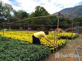 N/A Property for sale in Nong Bua, Loei 14 Rai Land For Sale In Phu Ruea