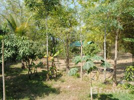 3 Bedrooms House for sale in Sam Phrao, Udon Thani 3 Bedroom House For Sale in Udonthani