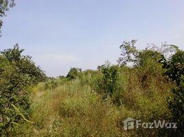 呵叻府 Na Klang Land For Sale With 7-3-48.2 Rai N/A 土地 售