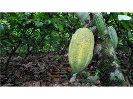 N/A Terreno (Parcela) en venta en , Alajuela COCOA AND DAIRY FARM IN PRODUCTION AND GROWING: Cocoa farm in San Carlos, San Carlos, Alajuela