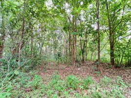苏梅岛 Ko Pha-Ngan 3 Combined Plots, Flat Jungle Land in Hin Kong, Phangan N/A 土地 售