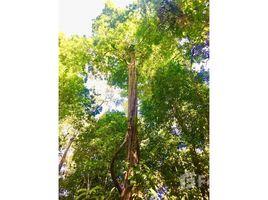 N/A Terreno (Parcela) en venta en , Puntarenas Jungle Adventure: Mountain Home Construction Site For Sale in Puerto Cortés, Puerto Cortés, Puntarenas