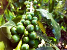 N/A Property for sale in Khi Lek, Chiang Mai Land For Sale 44 Rai Mixed Fruit Gardens