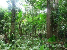 Esmeraldas Quingue Olmedo Perdomo Franco Caimito 10.000 m2: Excellent Lot in the Nature, Caimito, Esmeraldas N/A 土地 售