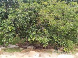 苏梅岛 Ko Pha-Ngan 2 Plots, 1 Beachfront on Chaloklum Bay, Ko Phangan N/A 土地 售
