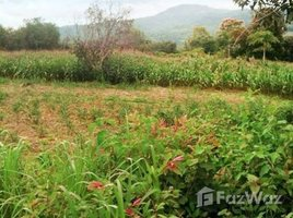 N/A Property for sale in Kok Thong, Loei 38 Rai Land For Sale In Mueang Loei