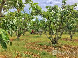 N/A Land for sale in Ban Noi Sum Khi Lek, Phitsanulok Mango Plantation Land for Sale in Phisanulok