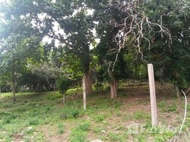 N/A Land for sale in Chang Phueak, Chiang Mai Huge Land for Sale in Chang Phuaek