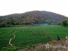 N/A Property for sale in Mueang Haeng, Chiang Mai Land For Sale In Chiang Dao 5 Rai