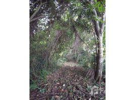Esmeraldas Quingue Olmedo Perdomo Franco Pure Nature 2 Hectares Land at Caimito, Caimito, Esmeraldas N/A 土地 售