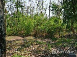 暖武里 Bang Khu Wiang 1-3-49 Rai Land for Sale in Bang Kruai N/A 土地 售