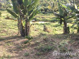 N/A Land for sale in Ward 1, Lam Dong Bán 1,6 ha Bảo lộc - 400 TC, 1,550tỷ, view nghỉ dưỡng tuyệt đỉnh