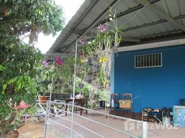 2 Bedrooms Property for sale in Ban Luang, Chiang Mai 4 Rai House with Land For Sale in Chiang Mai