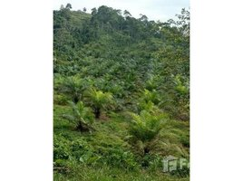 Pichincha Puerto Quito African Palm Oil Farm for Sale, Puerto Quito, Pichincha N/A 土地 售